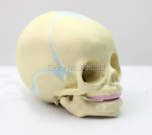 Tienda Online 30th semana de embarazo fundido natural cráneo del ...