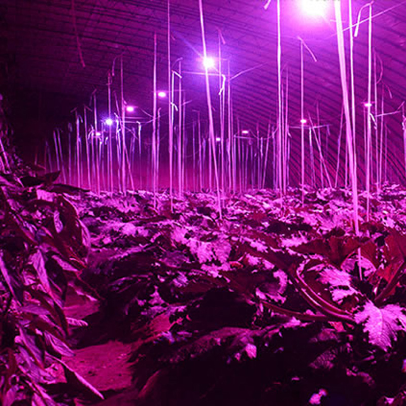 5бр Пълна спектрална лампа за растеж - Професионално осветление - Снимка 6