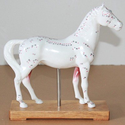 BIOMAGNETISMO HORSE