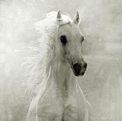 Peinture à l'huile à la main sur toile moderne 100% meilleur Art blanc dragon cheval peinture à l'huile originale directement de artis AN-003