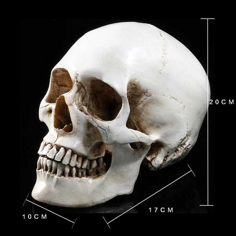 Lifesize 1 1 Human Skull Model Replica Resin Medical Anatomical Tracing Medical Teaching Skeleton Halloween Decoration