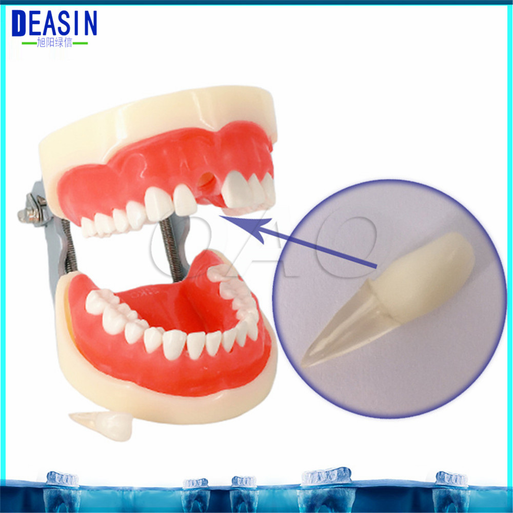 Dental Standard Teeth Tooth Model 28 pcs student learnng Removable Teeth dentist student learning model teeth model blue dental orthodontics communication model with 4 types of brackets