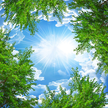 Custom 3D Blue Sky with White Clouds up above a  Forest Tree Branches
