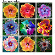 100pcs/bag Rare giant hibiscus flower plant balcony beautiful plant potted tree bonsai for home garden стоимость