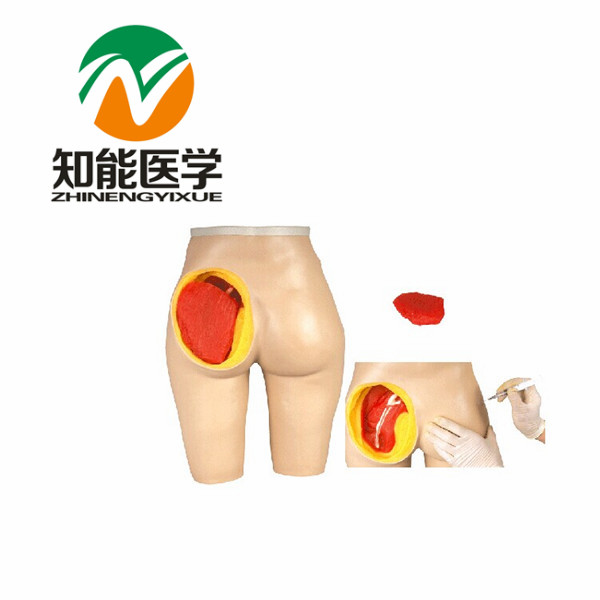BIX-H4T Advanced Anatomical Structure Hip Muscle Injection Model G048 bix y1005 standard anatomical acupuncture model 60cm