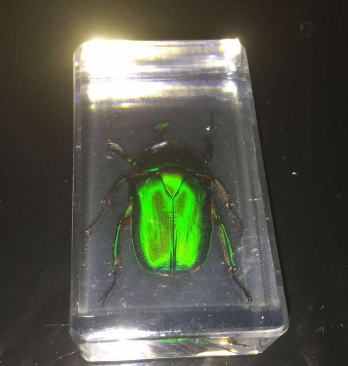 green beetle square vogue paperweight gift