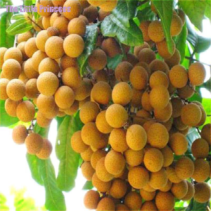 Fruit trees sale promotion shop for promotional fruit for Fruit trees for sale
