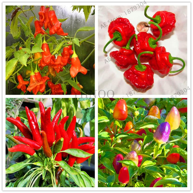 200 Pcs 100% True Bonsai  RARE Chili  Plant Easyy Grow For Home*Garden Thai Sun Pepper Potted Plant