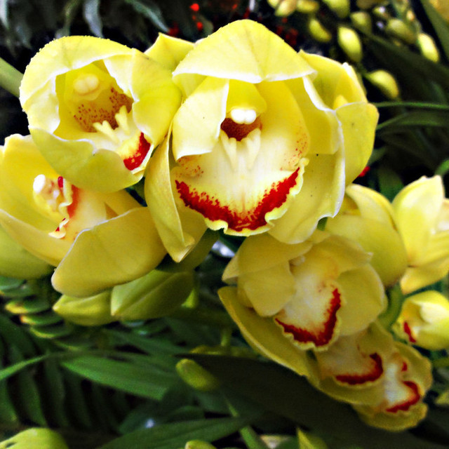 Orchid Seeds, Cymbidium Seeds, 100pcs/pack