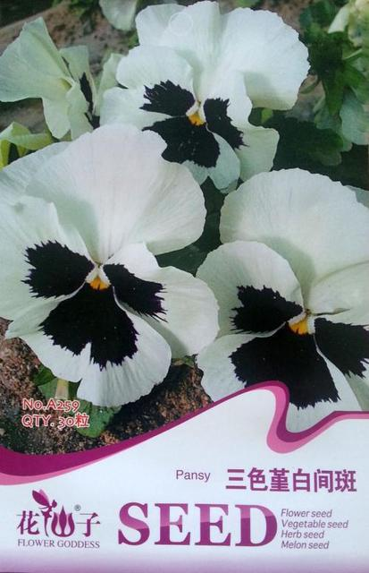 White pansies flower images flower decoration ideas white pansies flower choice image flower decoration ideas white pansies flower images flower decoration ideas white mightylinksfo