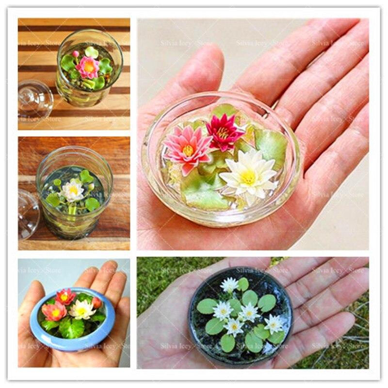 Aquatic Bonsai Plants 5 Pcs Mini Bowl Lotus Flower Water Lily Beautiful Flower Planting Potted for Home Garden Decoration