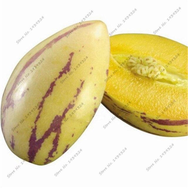 100 unids/lote de melón árbol Bonsai al aire libre no GMO de maceta Pepino melón planta fruta para pote de flor Macetas