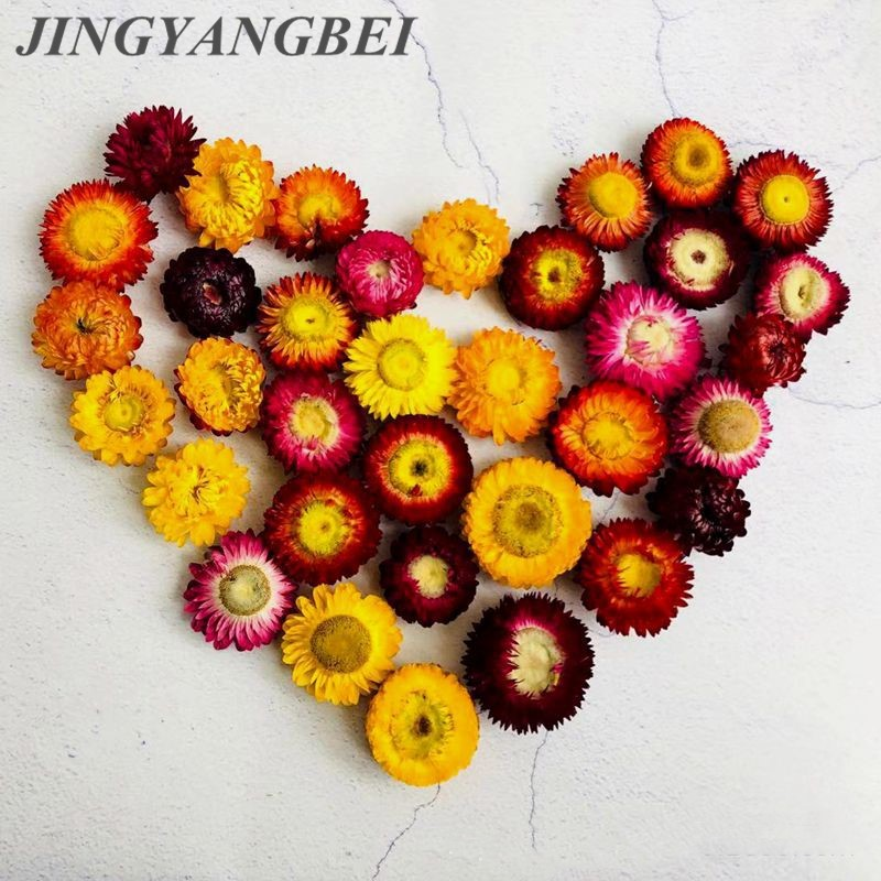 Natural Colorful Chrysanthemum Dried Flower Heads Wedding Flower Centerpieces Dry Flower  Preserved Flower 6PCS