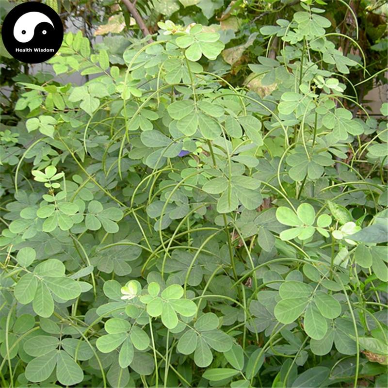 Buy Cassia Semente 400pcs Plant Herb Sickle Senna For Cao Jue Ming Zi