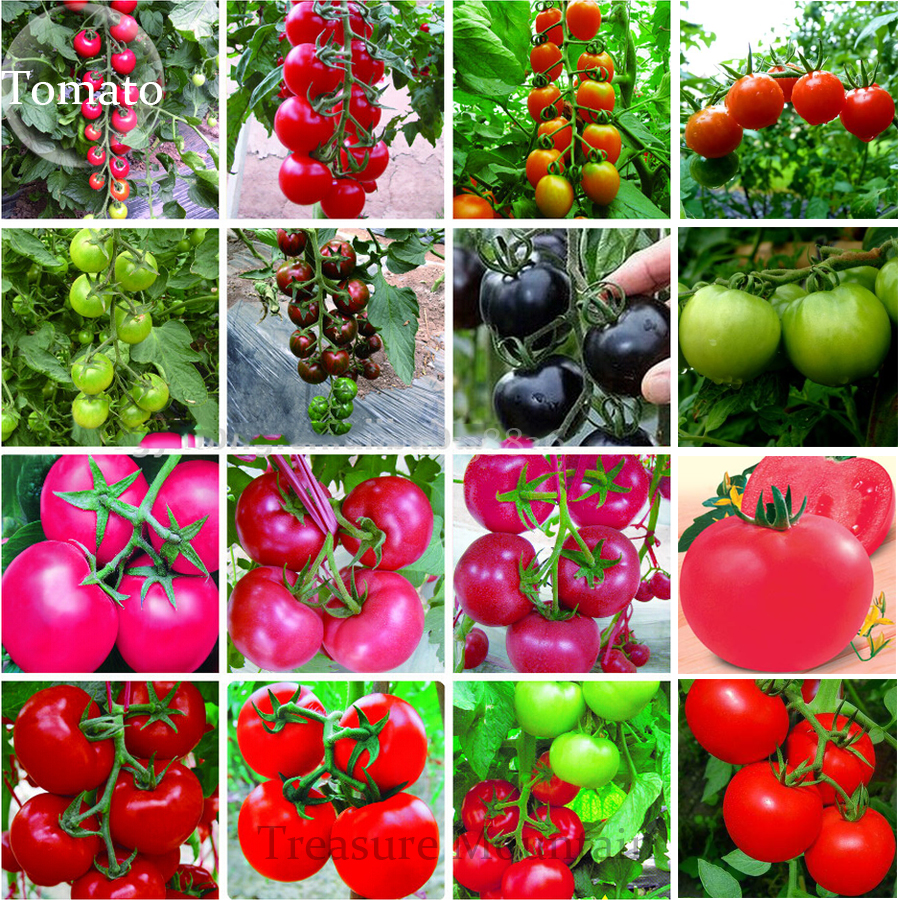 online get cheap tomatoes types aliexpress  alibaba group, Natural flower