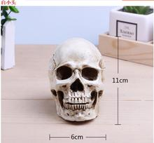 wholesale 11*6cm Mini skull mode head mannequin, resin skull, medical art, copying, drawing, sculpture, and ghost. M01007