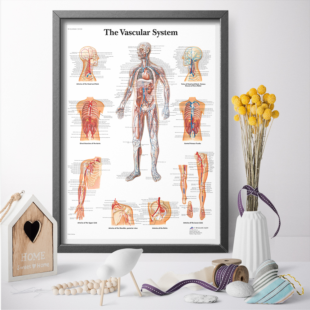 Physiology Of The Human Venous System Medical Education Poster Print