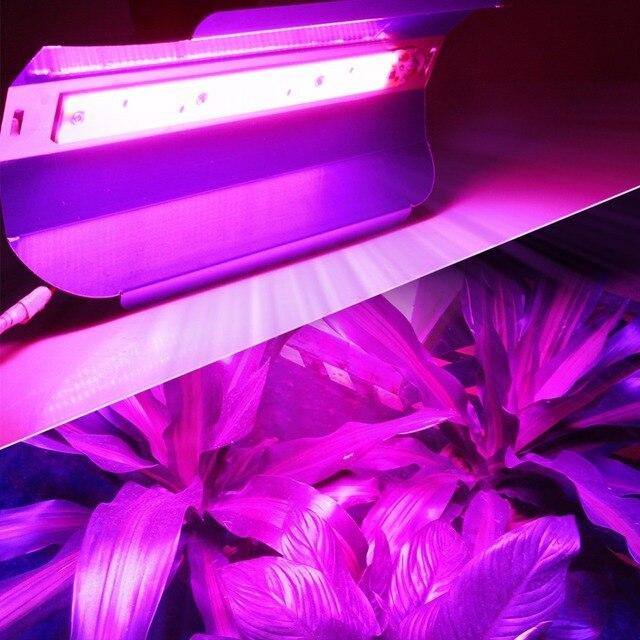 Spectre complet 30 W 50 W LED Phyto Projecteurs Haute Puissance COB LED Élèvent La Lumière Fitolampy Hydroponice AC 110 V 220 V IP67 étanche