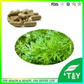 500 mg * 100 unids Ajenjo Dulce/Artemisia annua/Artemisia apiacea Cápsula con el envío libre