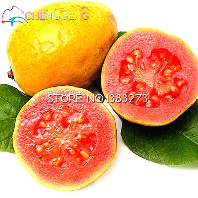 how to eat guava fruit seeds
