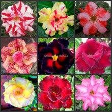 5 Семена-Свежий Редкие Adenium Obesum Семена (24 Цветов для вашего выбора)