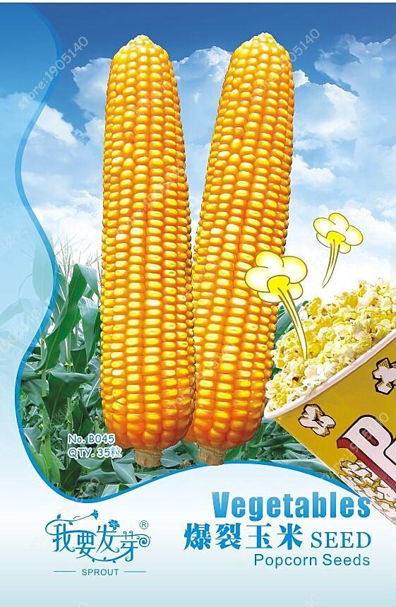 Popular Growing Popcorn-Buy Cheap Growing Popcorn Lots From China