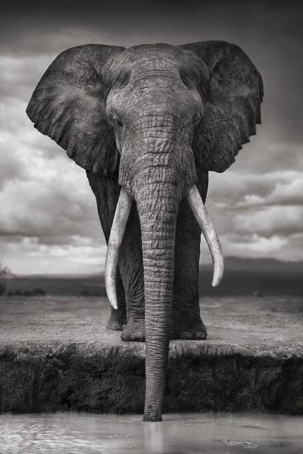 diy cadre faune africaine lphant potable gris photo close up affiche animale tissu soie affiche - Cadre Elephant