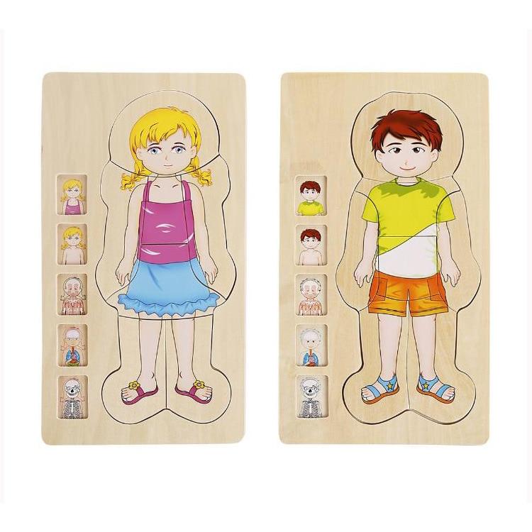 다층 나무 인간의 몸 퍼즐 구조 장난감 어린이 조기 학습 교육 신체 인식 아기 장난감 퍼즐