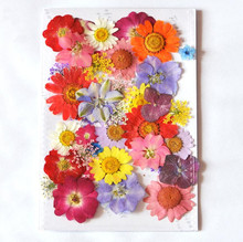 Design-4 40pcs Mixed Pressed Dried Flower Leaves Filler For Epoxy Resin Jewelry Making Postcard Frame Phone Case Craft DIY