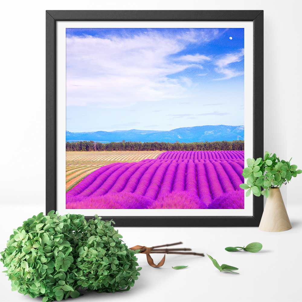 Purple Lavender Fields And Gardens Print Canvas Painting Wall Art Poster For Living Room Home Decoration No Frame