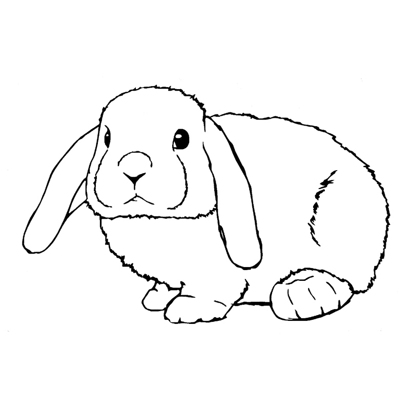 195cm 126cm Rabbit Lop Eared