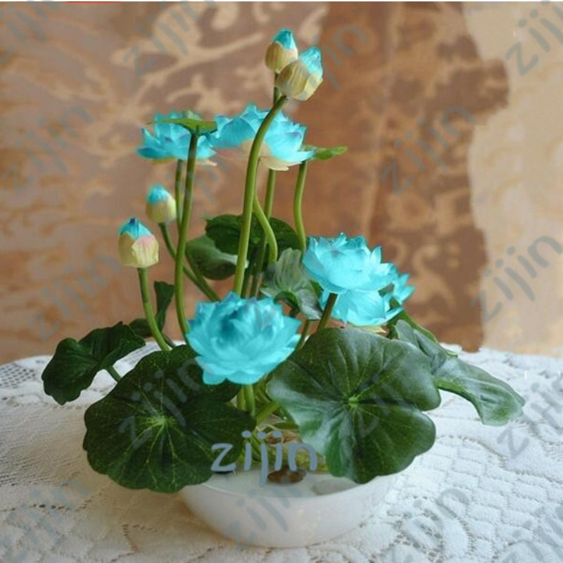 Hot Sale 10Pcs/Pack Bowl lotus Bonsai Hydroponic Plants Aquatic Plants Flower Bonsai Pot Lotus Water Lily plant Bonsai Garden