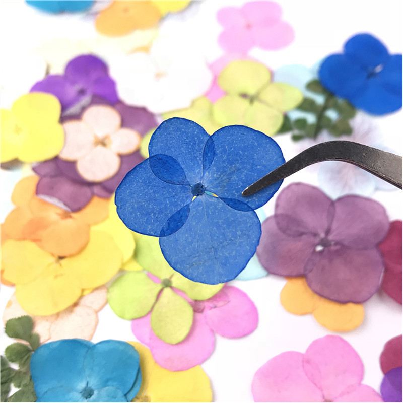 Latest Blue Hydrangea Real Dried Flower For Christmas Decoration Gift Card Free Shipment 120 Pcs