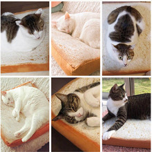 Soft, comfy sphynx cat bed