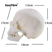 1:1 Human anatomy skull Model Brain skeleton Original Color Resin Crafts Medical teaching models traumatic pistol