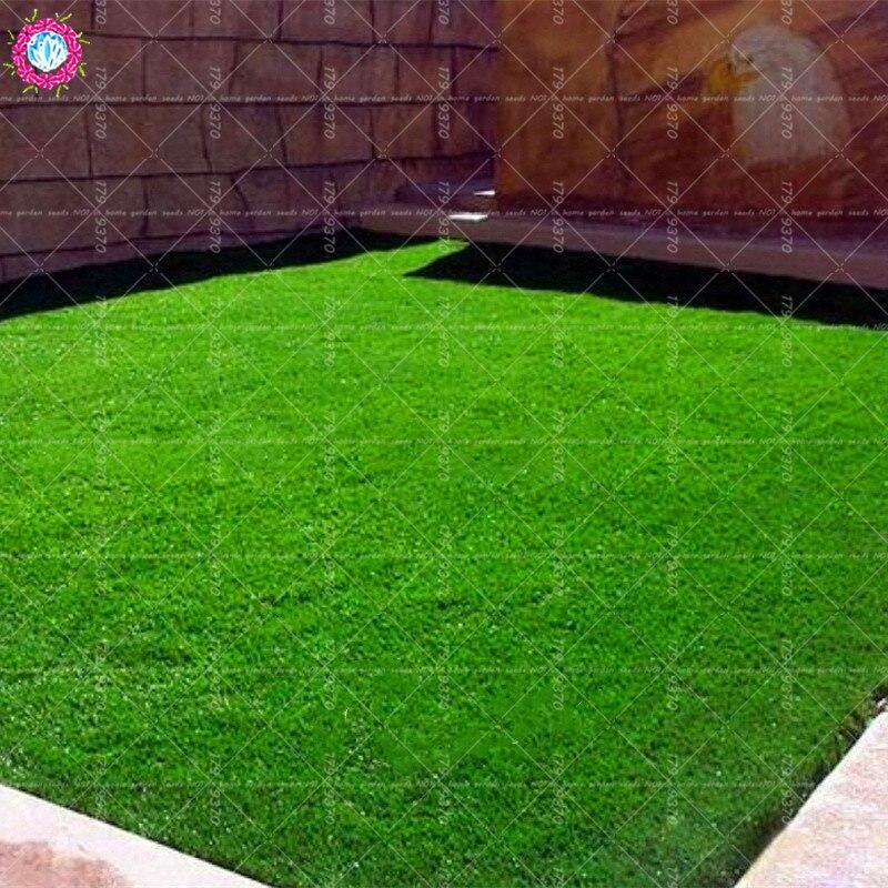 500pcs Σπόροι γρασιδιού Πηγή πράσινων - Αναλώσιμα κήπου