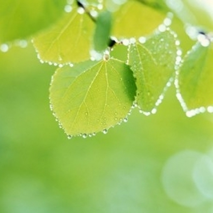 Selective focus close up of green leaves hanging from tree Poster Print by Panoramic Images (24 x 20)
