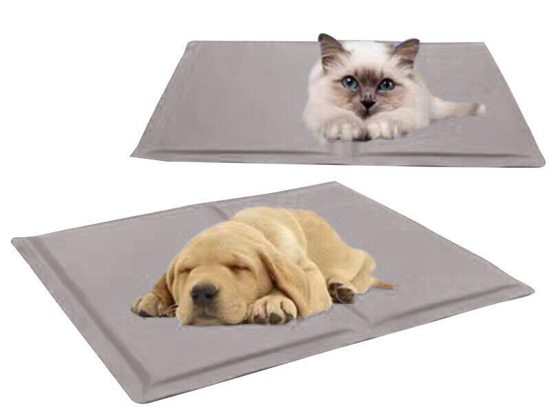 宠物体验感 (3)