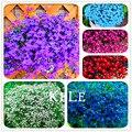 Best-Seller! 100 Sementes/Saco Lobelia sementes, jardim bonsai interior sementes de flores, decoração do jardim