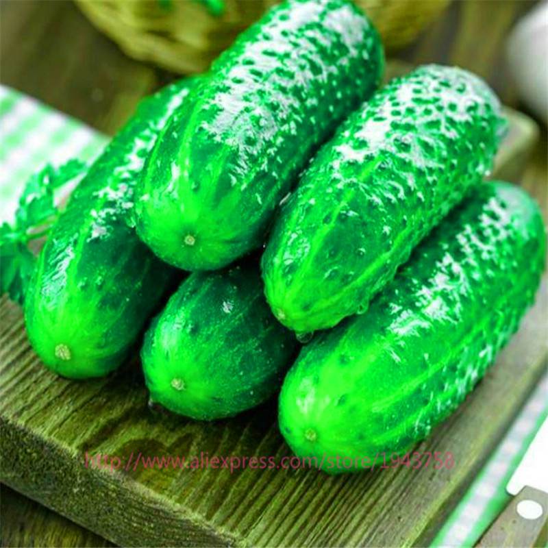 100pcs japan mini cucumber seeds Inorganic fruit,vegetable seeds,taste good quality Family garden plant Free Delivery