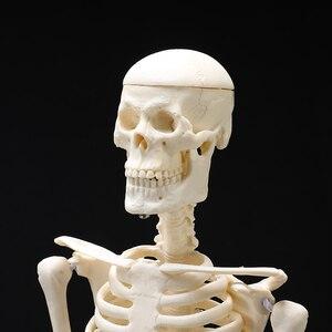 Image 5 - High Quality 45CM Human Anatomical Anatomy Skeleton Model Medical Learn Aid Anatomy human skeletal model Wholesale Retail