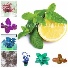New! 200 Pcs Mixed Color Melissa Original Herb Mint Bonsai Peppermint Flower for Home Garden Spearmint Planting Easy to Grow(China)