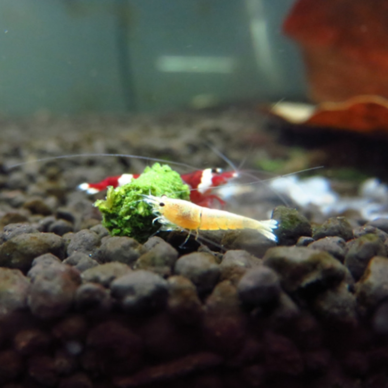 2019 New 35g Crystal Red Shrimp Food Natural Spinach Mixed Ingredient Aquarium Fish Tank font b