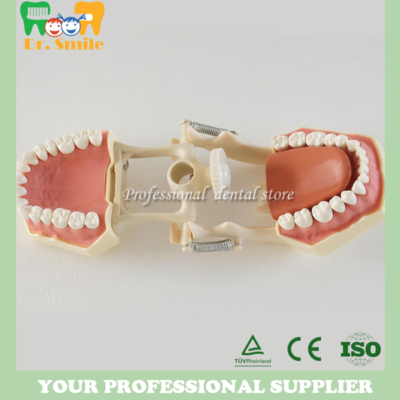 Standard tooth Model 28pcs Teeth Soft Gum Screw fixed DP Articulator children Dentist student learning mode dentist patient student learning model orthodontists model with metal brackets irregular tooth ortho metal