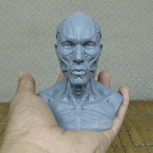 Para mujer 1:3 anatomía humana cabeza del cráneo cuerpo muscular ...
