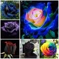 100 шт. Редкие розы растения Красивая Радуга розы садовые цветы plantas para jardin бонсай дерево для украшения сада - фото