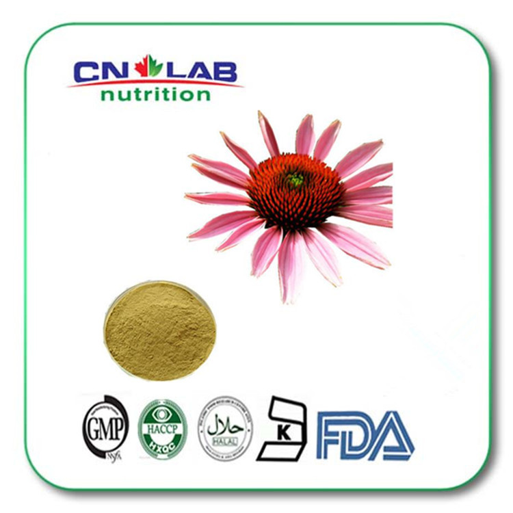 Wholesale 100% Pure from Echinacea Plant Extract with 2% Chicory Acid free shipping Echinacea Extract 1kg/bag