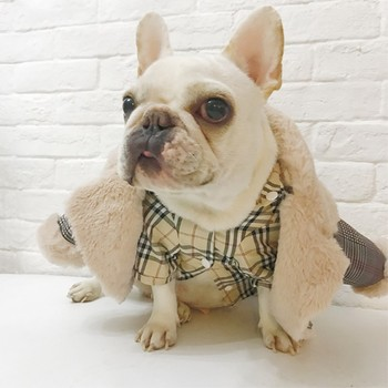 Dogs Winter Coat 4