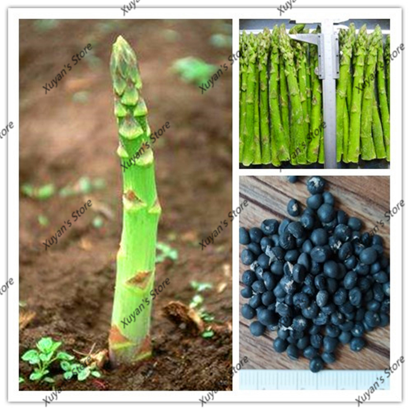 10 pcs Asparagus Seeds Organic Heirloom Rare Green Vegetable Seeds Bonsai Seeds for Home Garden plants