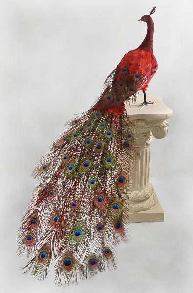 handcraft Red peacock 100cm long feather peacock simulation Lucky bird for room decoration valentine's day gifts free shipping on Aliexpress.com ...395 x 600 jpeg 64kB